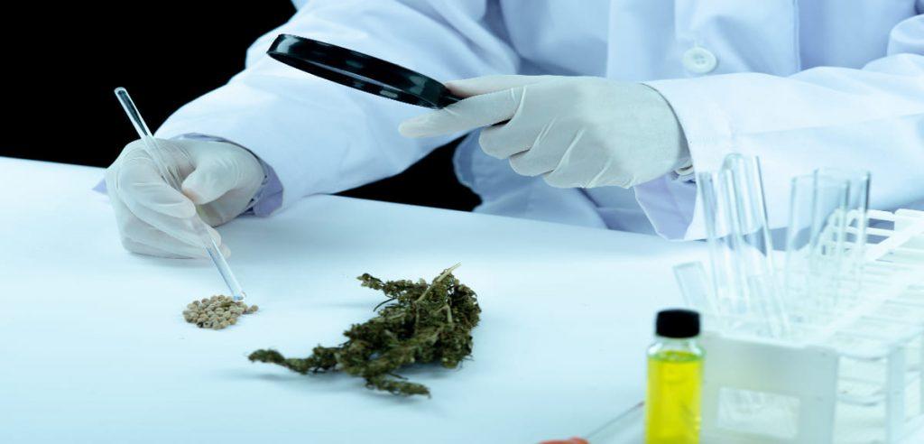 Produits dérivés du cannabis